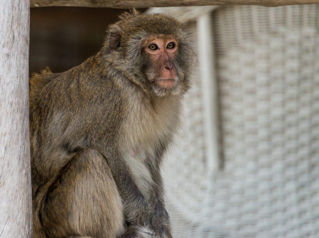 Monkey Island, Halong Bay, Vietnam, Asia