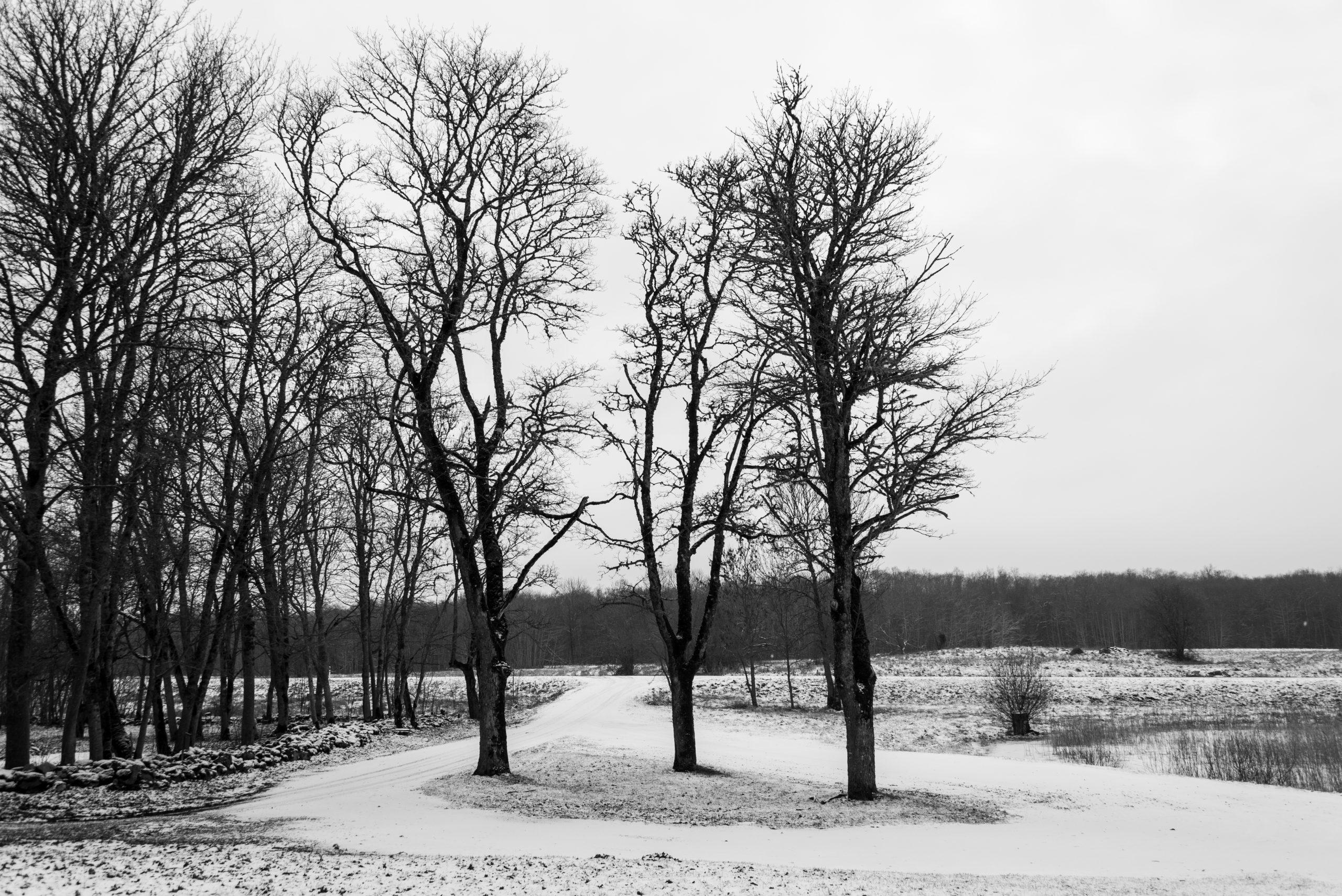 Linnaka Village, Karja, Saaremaa, Estonia, Baltic States, Europe