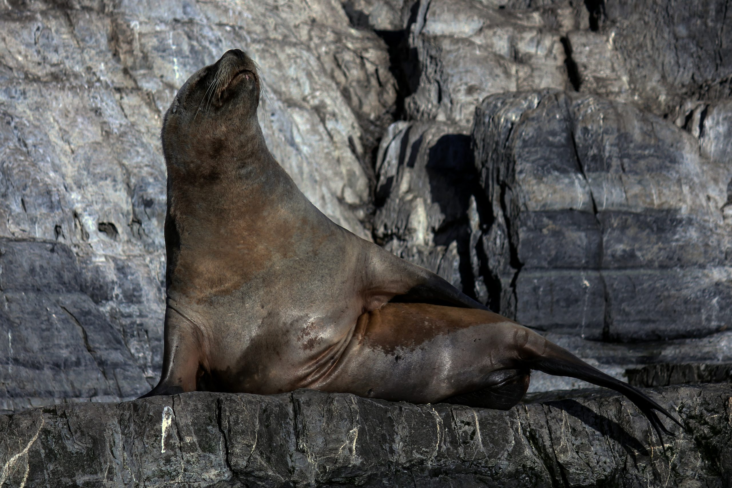 Isla de Los Lobos, Beagle Channel, Argentina, South America