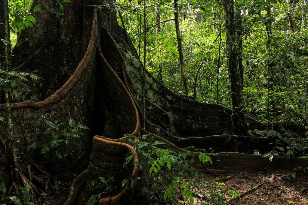 Madidi National Park, Amazon Basin, Bolivia, South America