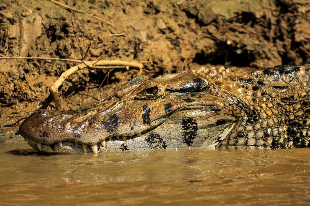 Rio Yacuma, Amazon Basin, Bolivia, South America