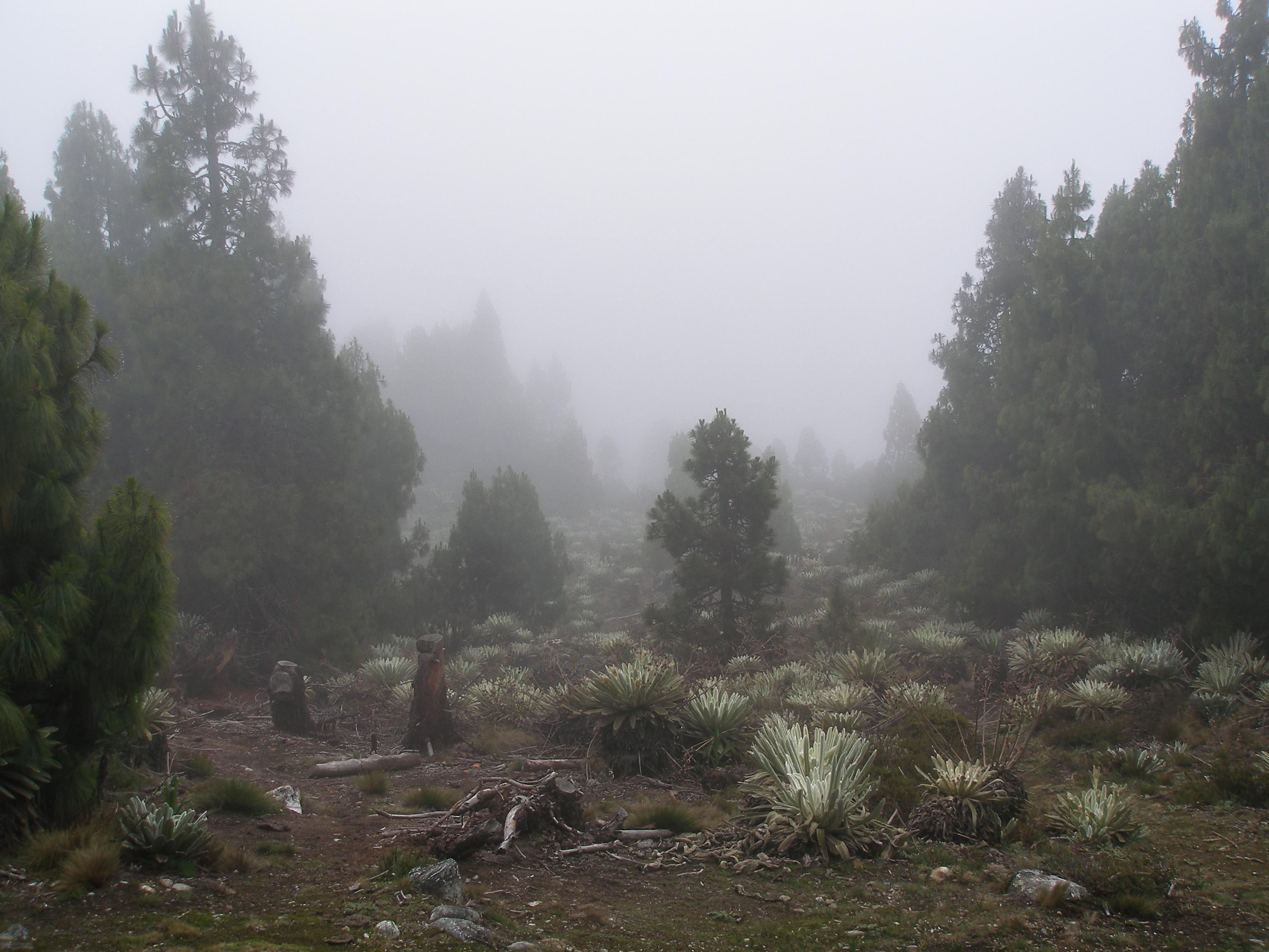 El Páramo de Piñango, Mérida, Venezuela, South America